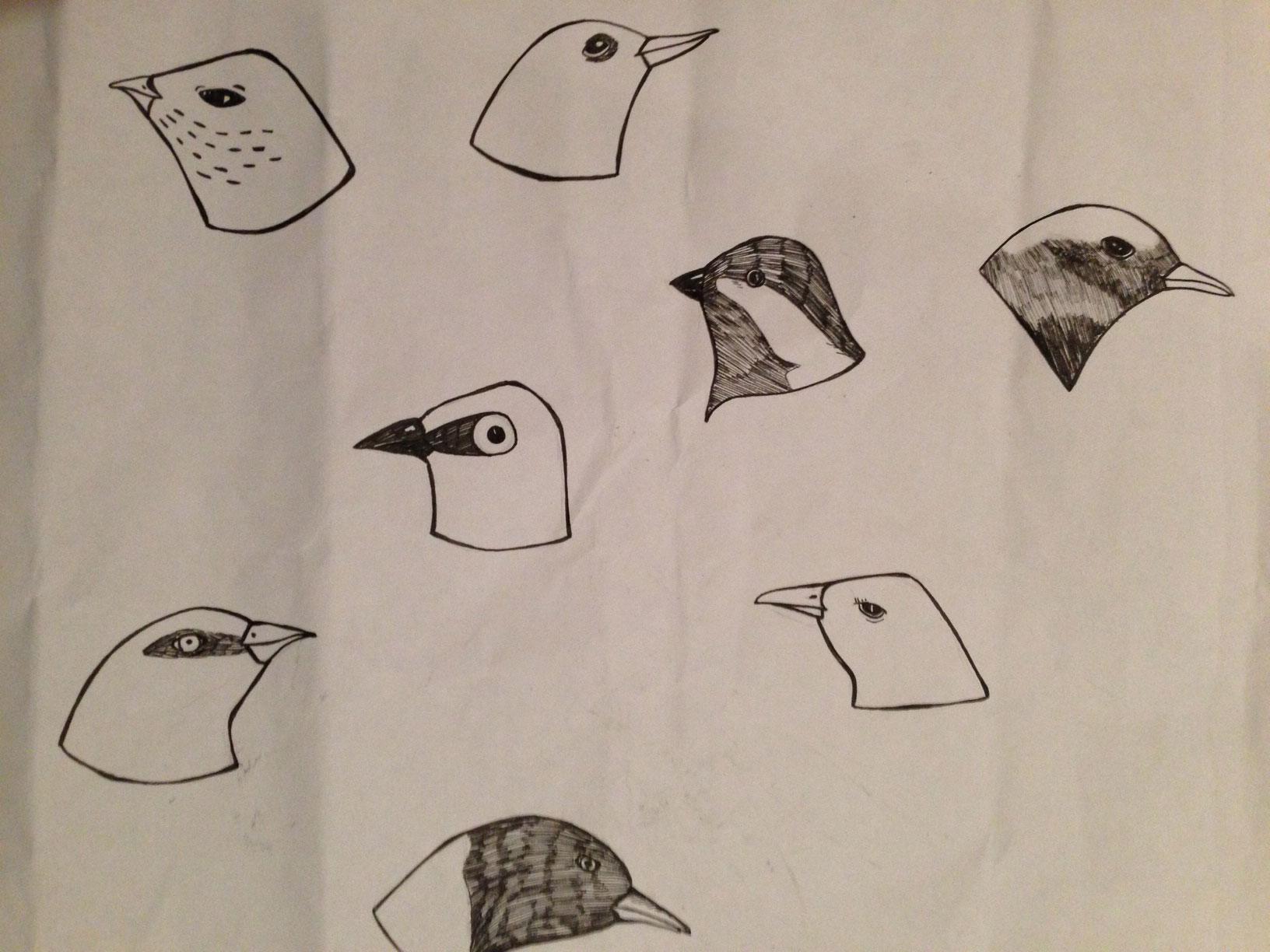 Olivia Villet birds